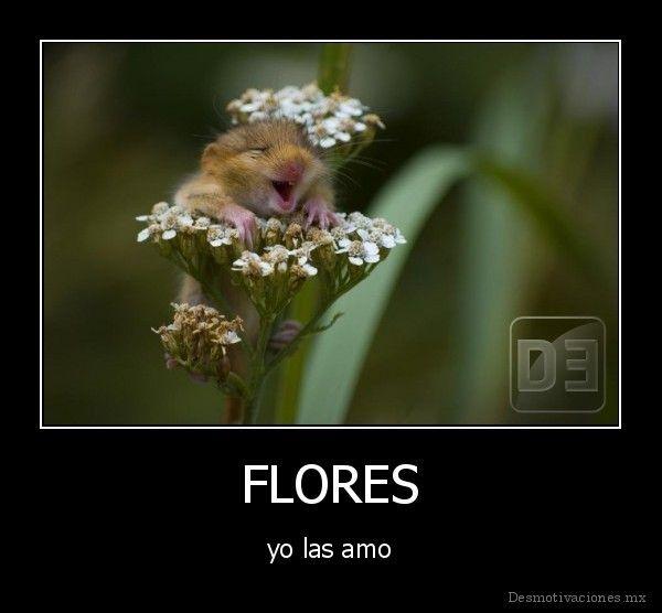 ¡Flores! (pronombres de objeto directo)