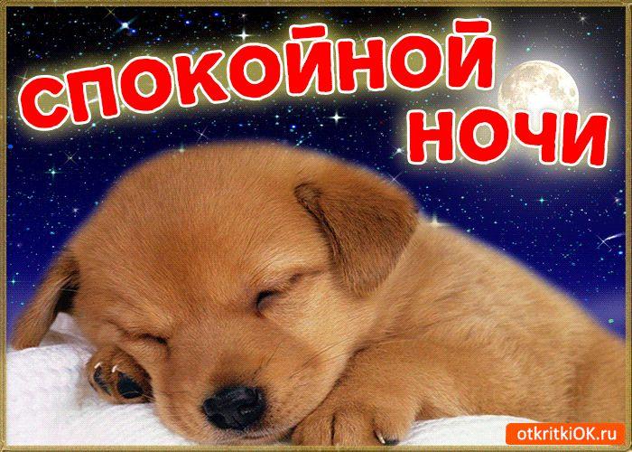 Спокойной ночи картинки животные с надписями, картинки поздравления