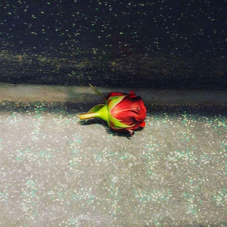 #DzieńKobiet #DzienKobiet #WomansDay #róża #rose #flower #kwiat #red #inthebus #pin #jennydawid#DzieńKobiet #DzienKobiet #WomansDay #róża #rose #flower #kwiat #red #inthebus #jennydawid