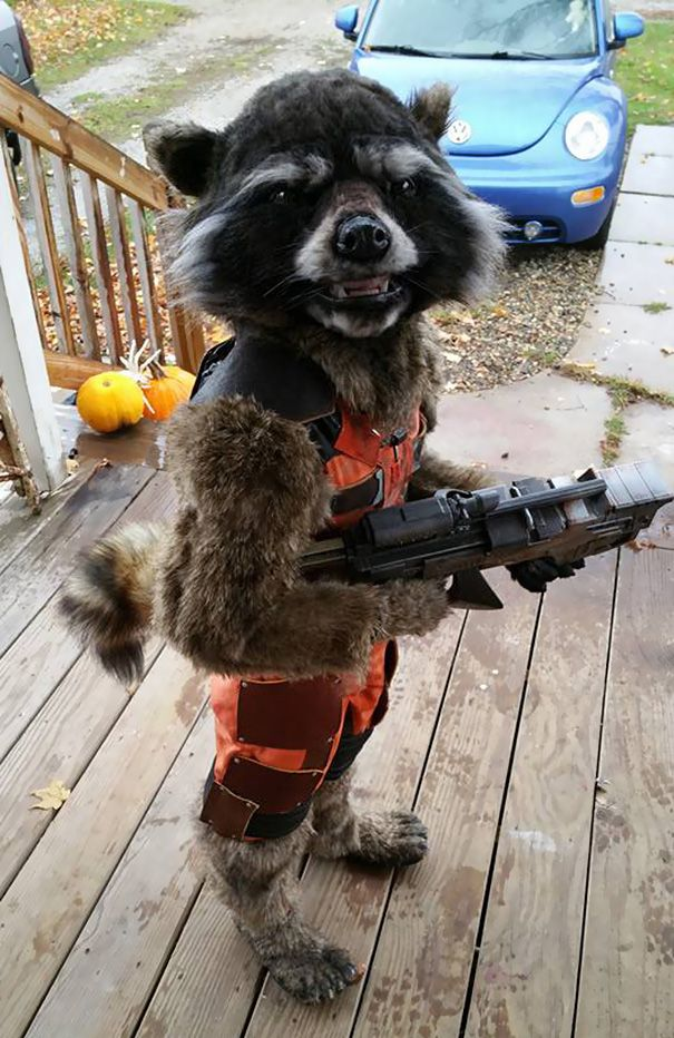 Kid's DIY 'Guardians of the Galaxy' Costume Wins This Year's Halloween | Bored Panda