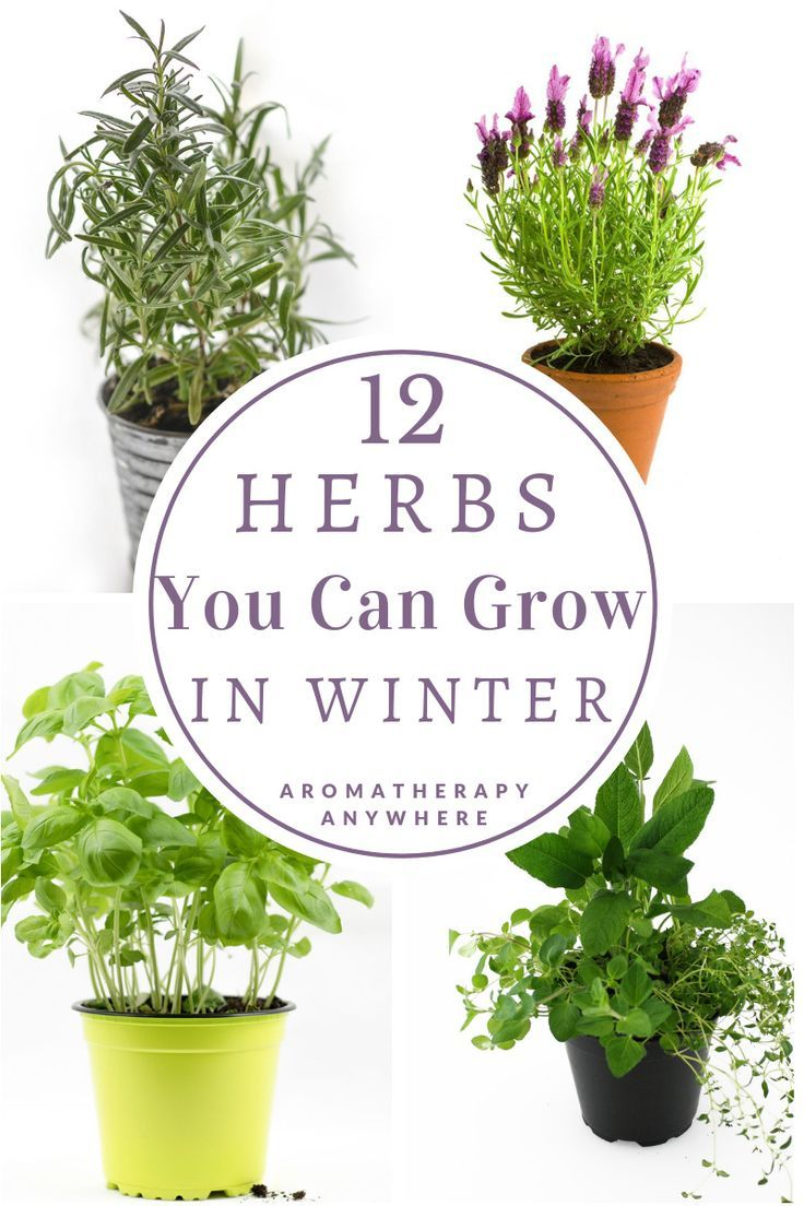Best Herbs To Grow In Winter Best Herbs To Grow Growing Herbs