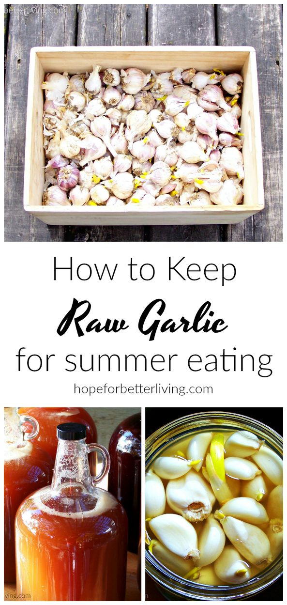 Is your garlic sprouting? Use this method to keep it until the fall harvest comes in!
