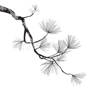 Pine tree drawing | Pine Tree Branch Royalty Free Stock Vector Art Illustration