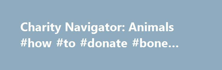Charity Navigator: Animals #how #to #donate #bone #marrow http://donate.remmont.com/charity-navigator-animals-how-to-donate-bone-marrow/  #education charity # Charity Categories Animals Animal charities protect, defend and provide needed services to domestic and wild animals. These organizations preserve wildlife habitats and protect endangered species, and seek ways to sustain and promote those habitats and species over time. We classify Animal charities into three Causes: Animal Rights…