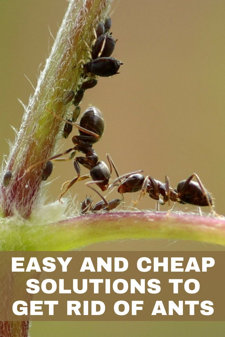 7 best Yard Remedies images on Pinterest   Insects, Landscaping ...