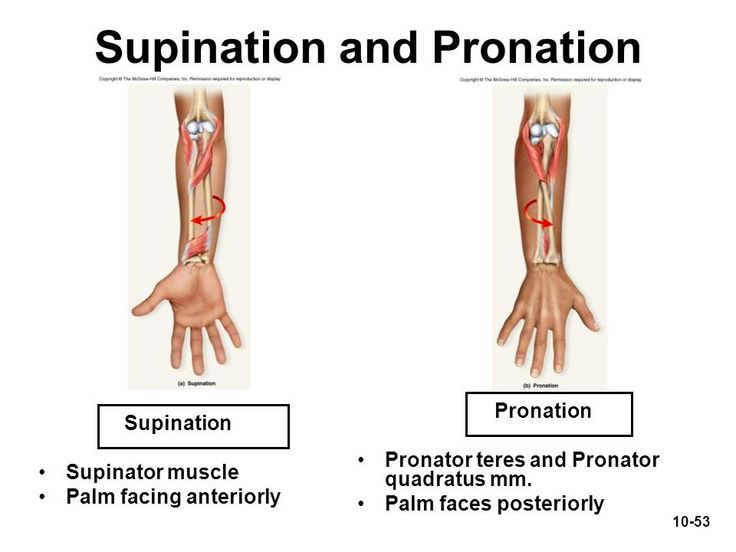 Supination and pronation of the forearm supinator not for Floor action definition