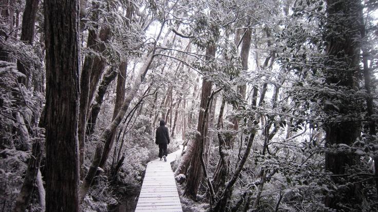 Dove Lake Walk - Cradle Mountain National Park, #Tasmania, #Australia. #travel.