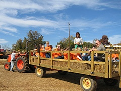 FALL: Denver Downs Farm - pumpkin patch, hay ride, games, food, rides, etc.