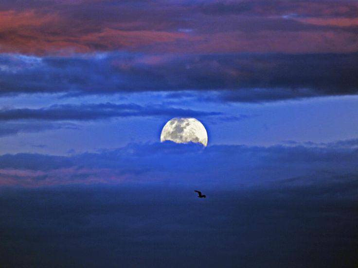 The supermoon over Sydney at dusk. Picture: Nicholas Eagar