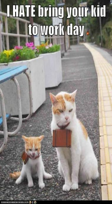 Best FUNNY CATS Images On Pinterest Cats - 12 heartbreaking first world cat problems