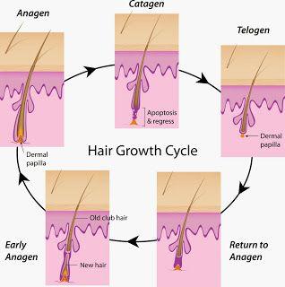 Saçınız Hızlı Uzasın: Saç Nasıl Uzar  http://sacuzamasi.blogspot.com.tr/2015/02/sac-nasil-uzar.html