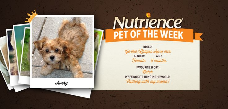Avery is one adorable #pup who #loves #cuddles with mama! Does your furry #friend have what it takes to be #Nutrience Pet of the Week? Submit them here: http://bit.ly/PetOfWeek