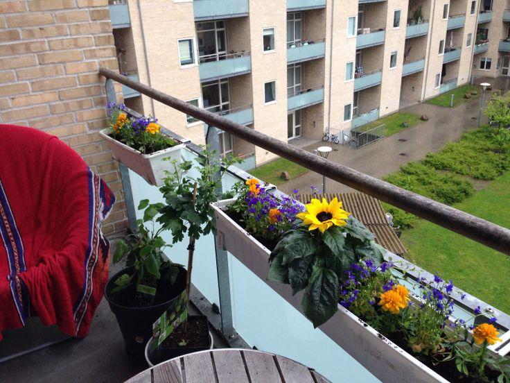 Køb nogle flotte blomster og afgrøder og start projekt altankasse.