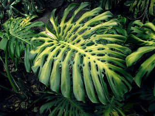 Leaf at the base of the mountain | por Mary P Madigan