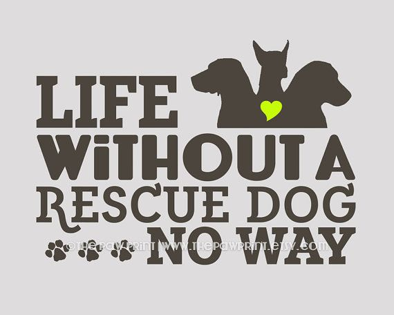 25+ Best Rescue Dog Quotes On Pinterest