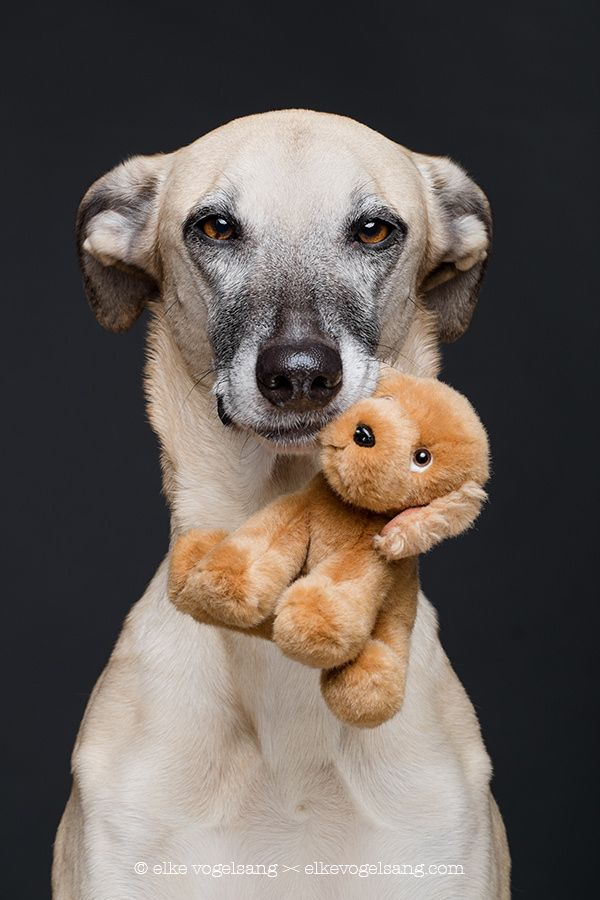 A dog is for life by Elke Vogelsang