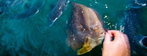 Fish Feeding - Aquascene | Aquascene | Fish Feeding Sanctuary