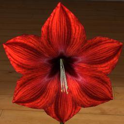 Amarylis czerwony 3D