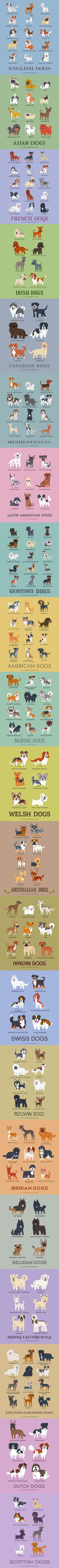 Cool list of various dog breeds from all over the world. Cool if you want to know where your favorite breed originated. :)