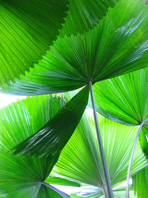 & Other Stories | SS/15 Inspiration green by hokulea, via Flickr