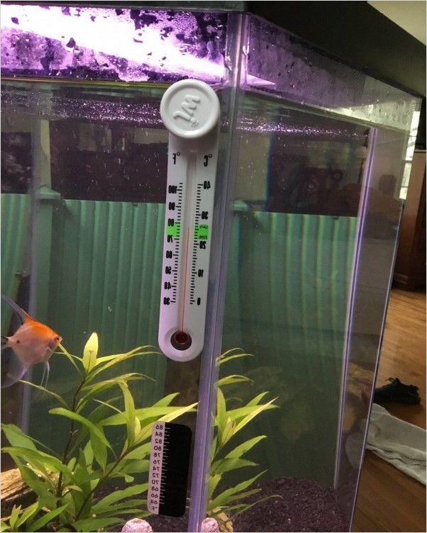 Tropical Fish Tank Temperature In 2020 Tropical Fish Tanks Tropical Fish Betta Fish Tank