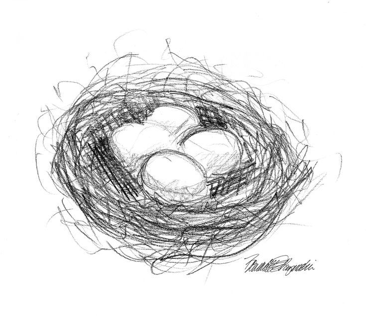 Featured Artwork: A Birdu0027s Nest!