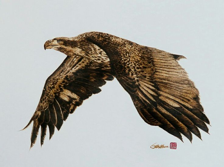 Eagle -Pyrography on paper