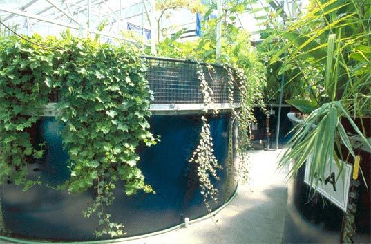 "tanks that are part of an interior living machine to clean waste water--the technology uses ""helpful bacteria, fungi, plants, snails, clams and fish that thrive by breaking down and digesting pollutants"", selecting and then cultivating diverse communities is key in order for all compounds to be treated.   via inhabitat"