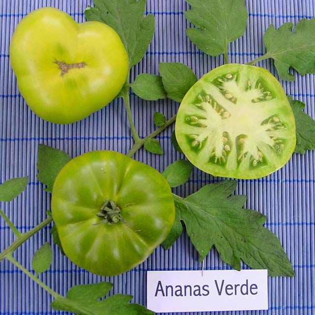 Heirloom Tomato Ananas Vert エアルーム・トマト・アナナス・ベルテ