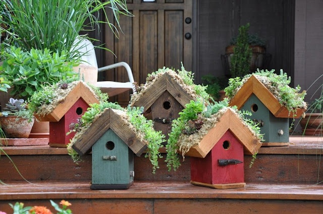 Living roof bird houses and feeders. Living walls, wreaths and containers. All made with drought tolerant, winter hardy sedums and succulents. Once established, requires little or no watering other than the rain...