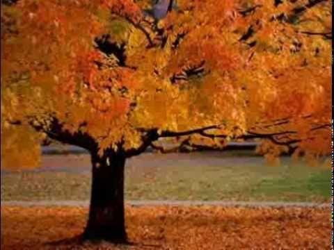 Itt van az ősz, itt van újra - Koncz Zsuzsa