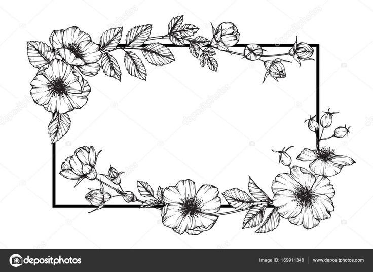 Marco de flor color de rosa salvaje dibujo. Dibujo y dibujo con línea blanco y negro-arte — Ilustración de Stock #169911348