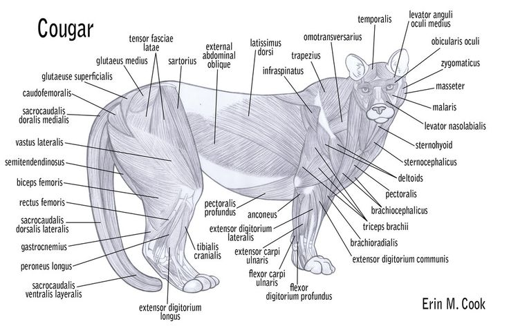 Horsedigestivesystemdiagr icture X in addition Horsedigestivesystemdiagr icture furthermore Lung likewise Ulceras furthermore Nmws Z Tdk Zr Txf Jg Q M. on horse digestive system diagram