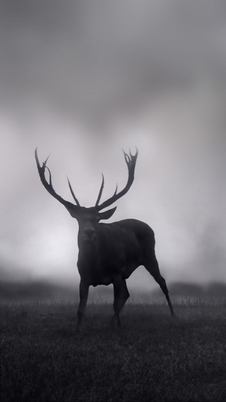 free download deer wallpapers iphone 7 and 7 plus jetblack for iphone