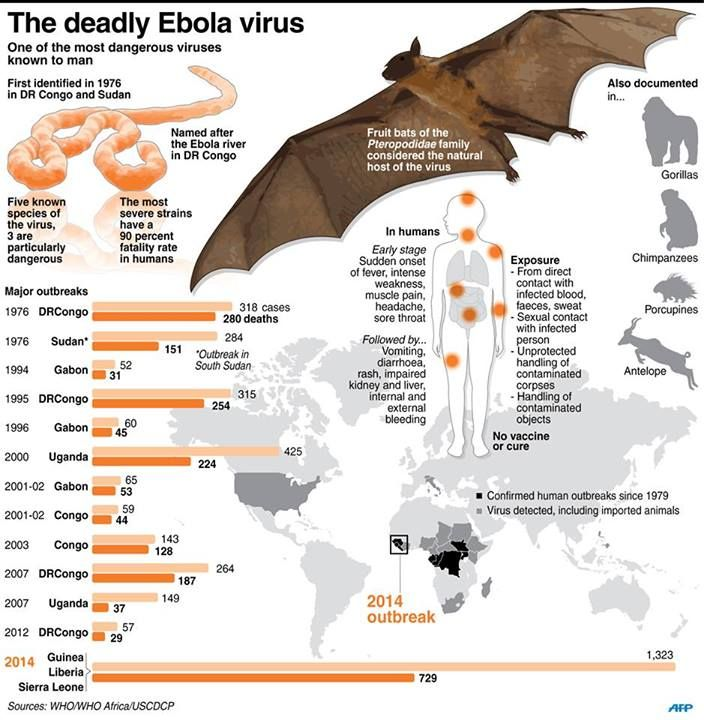the ebola virus an overview Global ebola update overview ebola: overview  executive summary ebola is an acute and serious infection that can be fatal if left untreated (world health organization) the virus is spread through direct person to person contact with an infected person or their body fluids (saliva, semen, blood).