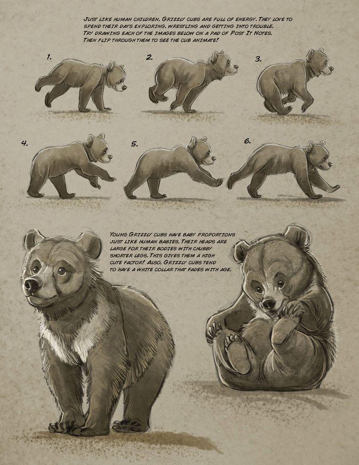 12 best Anatomy - Bear Necessities images on Pinterest | Animal ...