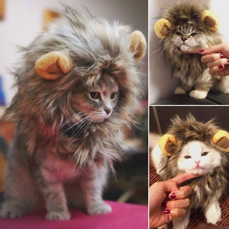 furry pet costume lion mane wig for cat halloween fancy dress up with ears party home drop shipping - Halloween Costumes For Kittens Pets