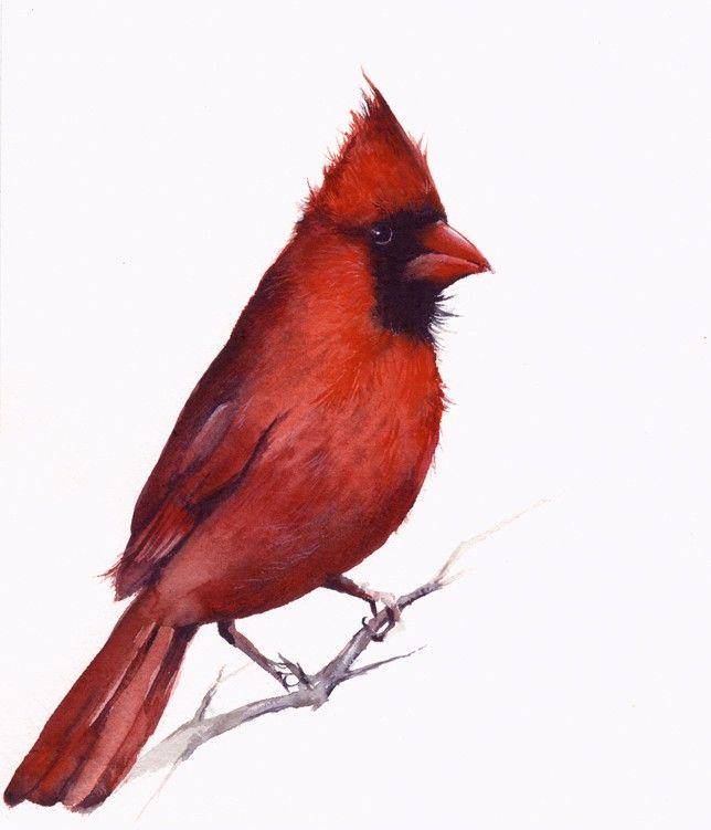 Cardinal Archival print of watercolor -cardinal painting, bird art, nature