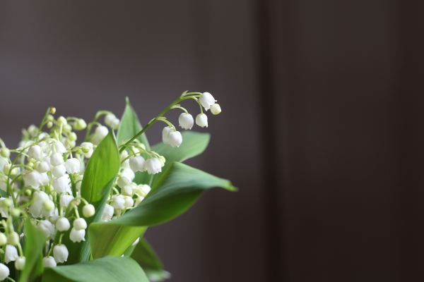 Lily of the valley's. Photo by: Linda Wenneson