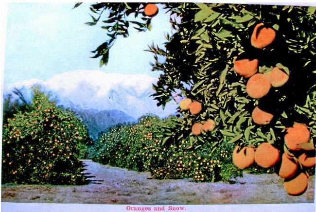 Oranges and the weather in Pasadena Ca https://www.facebook.com/pages/I-Love-Pasadena-Ca/318231858289866