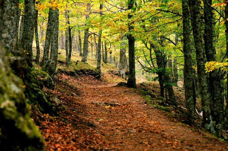 Autumm Woods by Nacho Grande on 500px