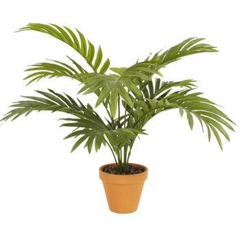 Palmier areca en pot Ø 11,5 cm, H. 50 cm