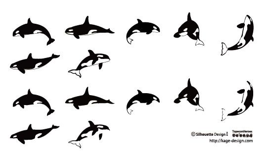 orca 3 of these frolicking along my hairline would be interesting