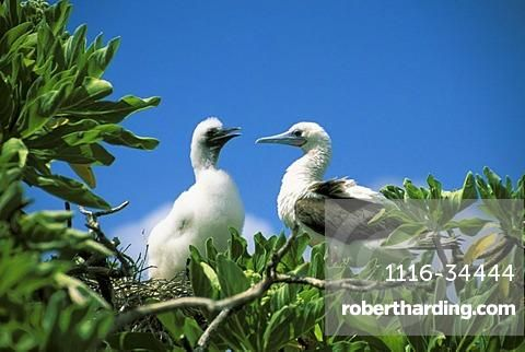 Found This On Robertharding Com International Date Line Island Nations Kiribati Island