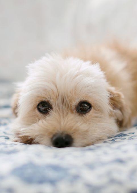 puppy dog eyes.