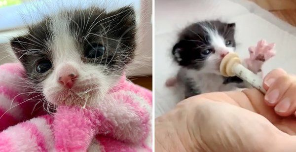 Kitten Size Of A Newborn Was Found On The Streets Alone But He