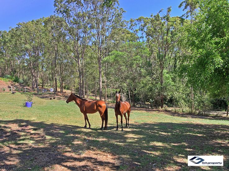 Want your own Ranch close to the City? Check out Narangba rd Kurwongbah