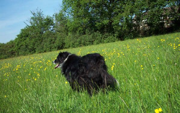 Walkies with my dog Sally