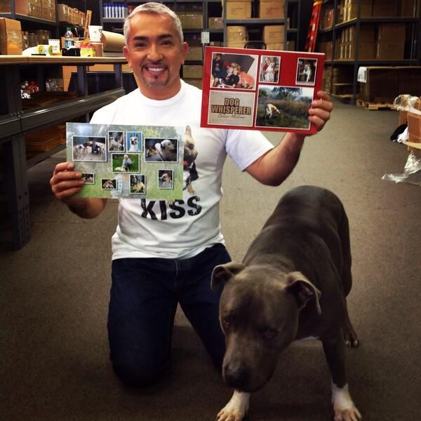 @Cesar Millan: Thank you so much Maren from Germany for sending me this photo diary and note.  #fanartfriday #heycesar