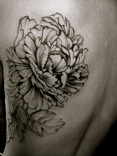the gallery for peony tattoo art. Black Bedroom Furniture Sets. Home Design Ideas